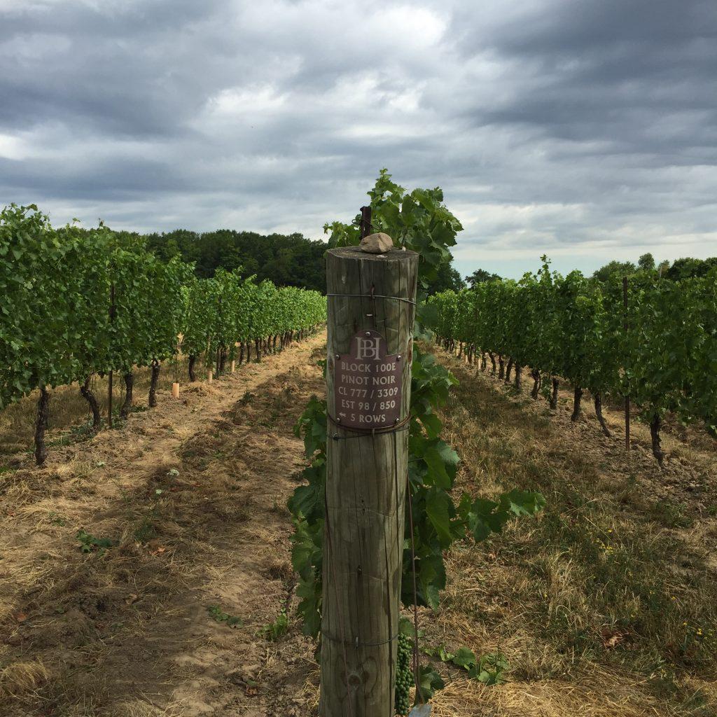 Hidden Bench Vineyards - Pinot Noir