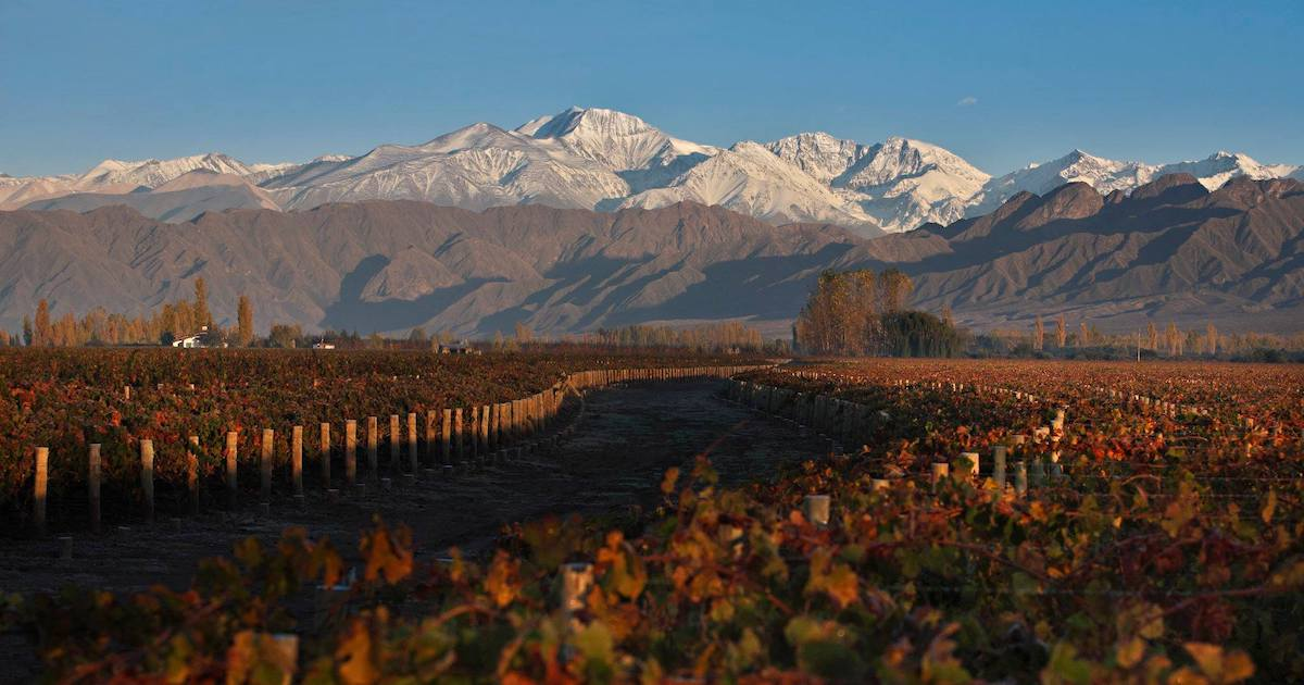 The Wine Regions : Argentina - Cover