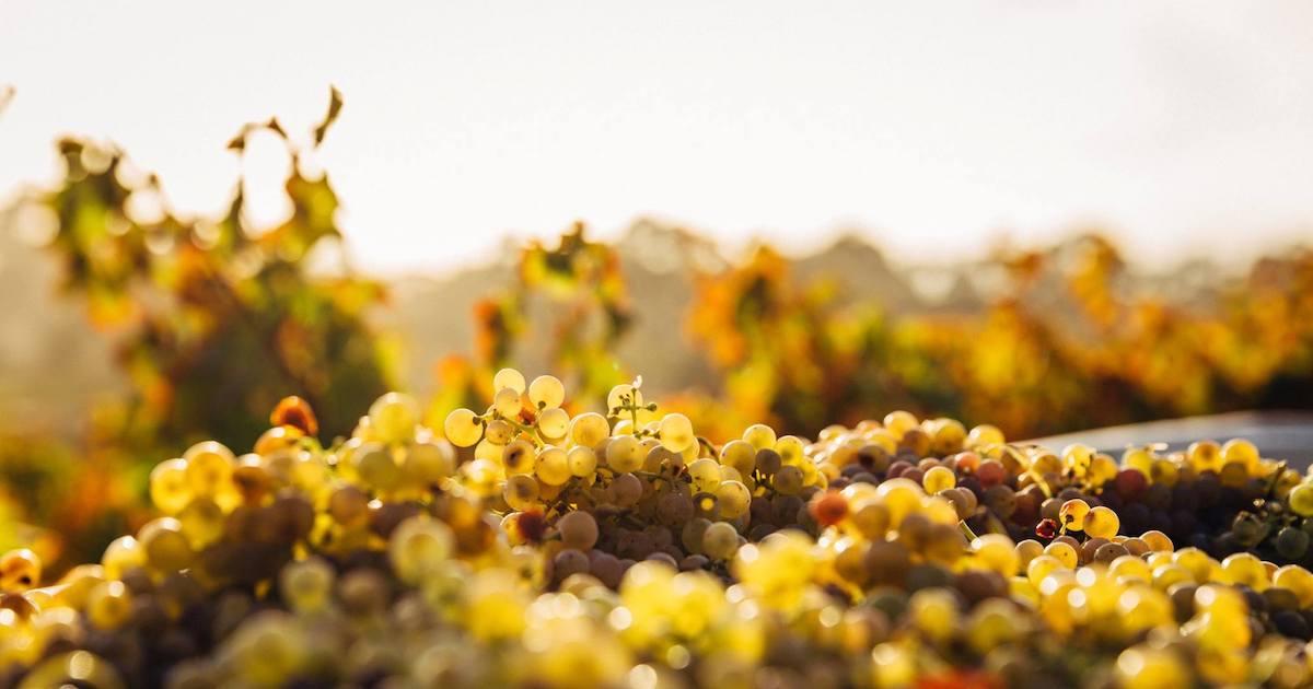Les Régions du Vin : Le Portugal Couverture