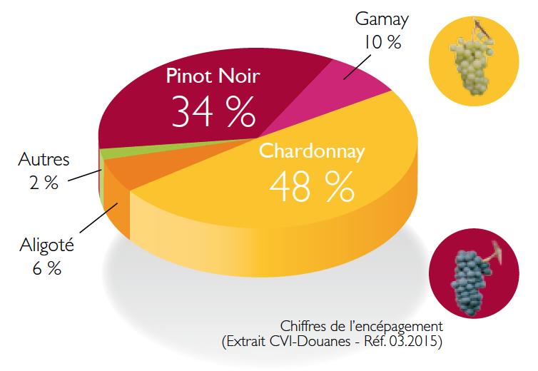 Les régions du Vin : La Bourgogne et ses cépages