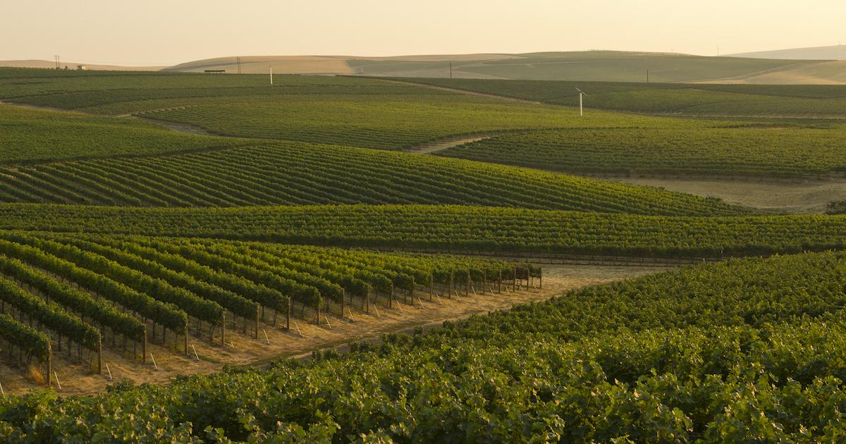 | Les Régions du Vin : État de Washington