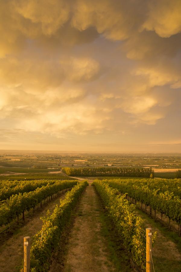 Sunset at Seven Hills Vineyard, Walla Walla, Washington   Les Régions du Vin : État de Washington