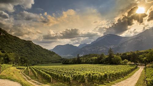 Ferrari Trento vignes soleil