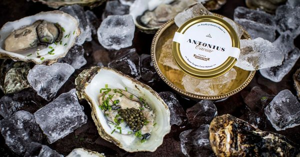 Oysters-&-Caviar---Cover